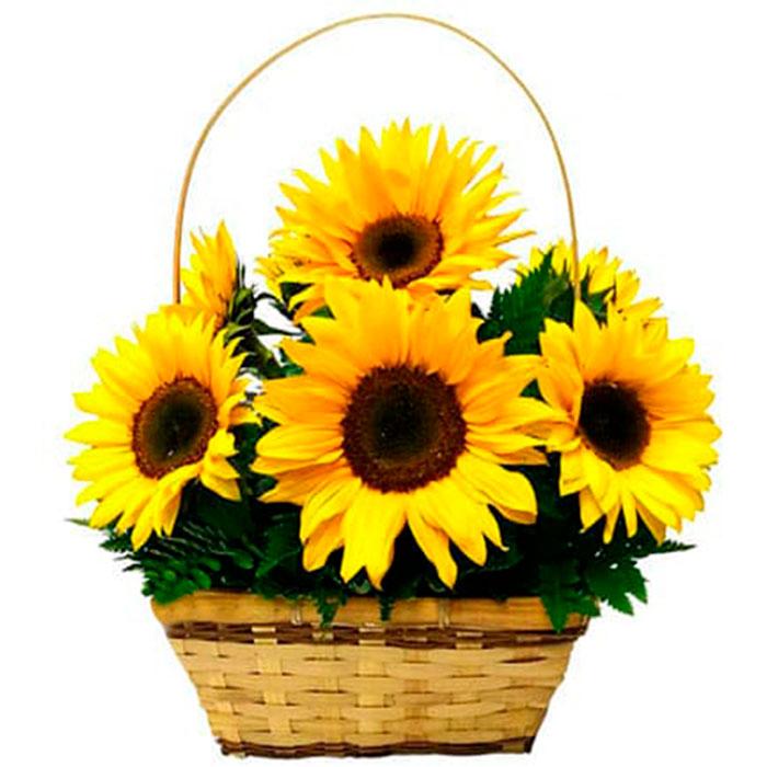 Canasta-Amarilla-Girasoles_Flores Cali es Cali