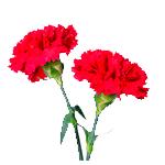 Flores-Clavel