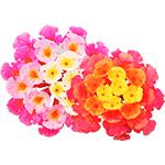 Flores-Lantana