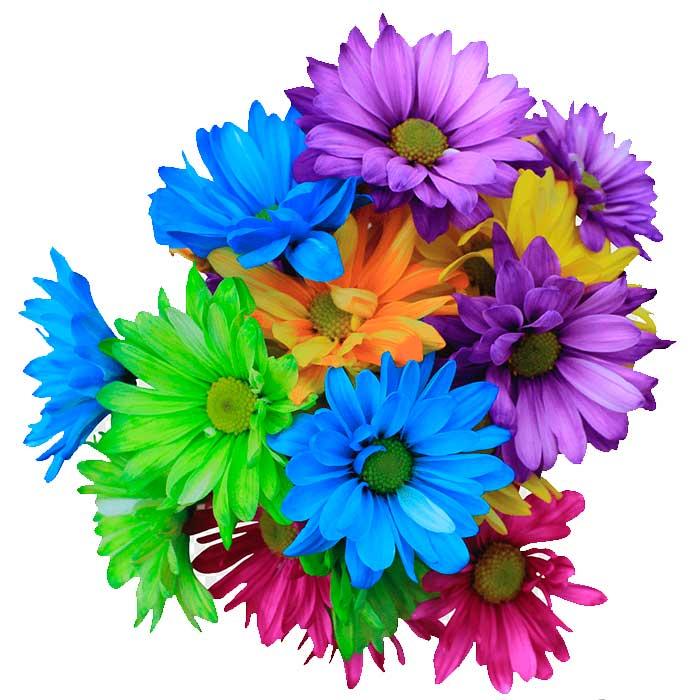 Ramo-Margaritas-De-Colores_flores-cali-es-cali-
